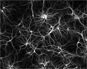 Inter-neuronal firing